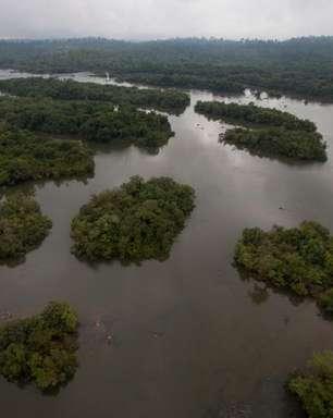 Pará diz que é inadmissível queima de madeira por Belo Monte