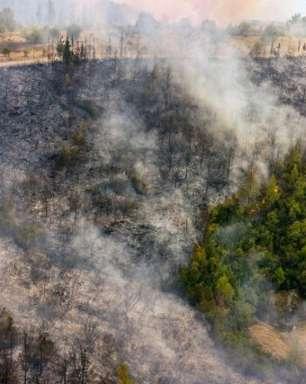 Incêndios florestais devastam Turquia e Grécia