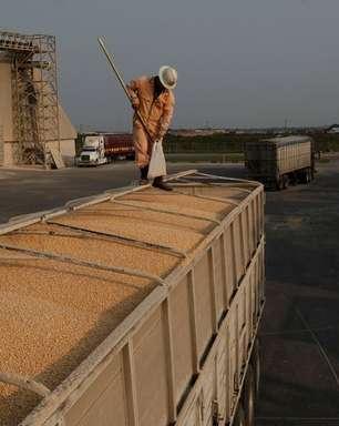 Agroconsult corta previsão para milho 2ª safra do Brasil em 4,4 mi t após geadas