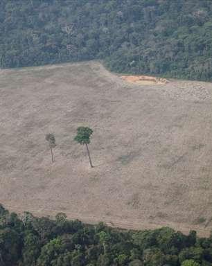 Desmatamento da Amazônia pode reduzir chuva anual em até 70%