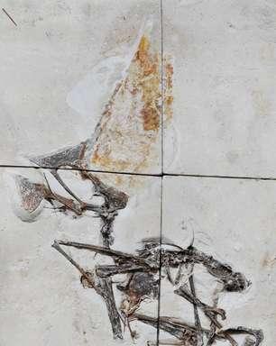 Fóssil apreendido pela PF é um dos mais preservados do País