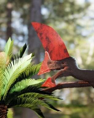 Salvo de contrabando, fóssil raro encontrado no Nordeste revela pterossauro com crista 'gigante' e dificuldade de voar