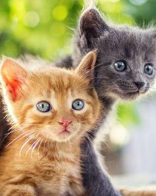 Conheça o gato de cada signo!