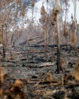 3 em 4 espécies ameaçadas têm habitats afetados por incêndios na Amazônia
