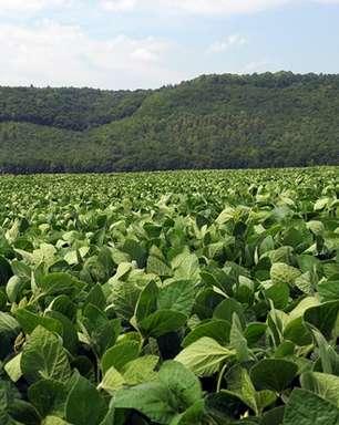 Refúgio estruturado na soja é um aliado para o futuro produtivo das biotecnologias