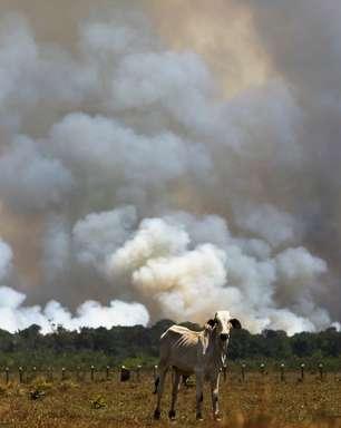 Amazônia: gasto militar cresce 178%, mas desmatamento segue