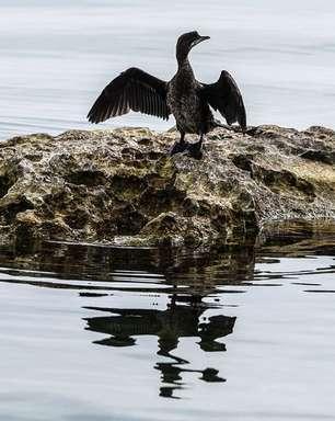 A desconhecida e ameaçada 'Galápagos' da Europa