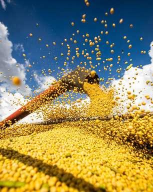 Chineses compram 10,9% a mais de soja brasileira neste agosto, na comparação com 2020