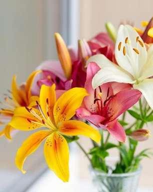 As flores revelam a sua personalidade: faça o teste!
