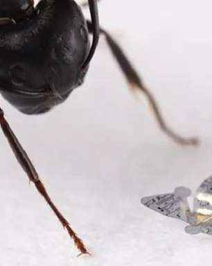 Chip voador menor que um grão de areia pode monitorar doenças e poluição