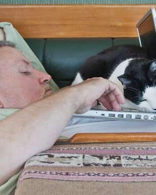 Gato é o melhor companheiro para seu home office