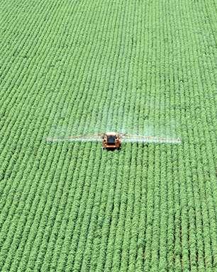 Plantio da safra de soja do Brasil 2021/22 alcança 1,3% da área
