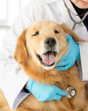Além do amor: o coração dos pets também pode ter doenças
