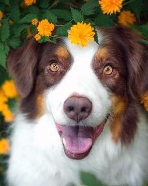 Como cuidar do seu pet na primavera