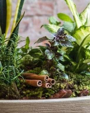 O poder das 7 ervas: aprenda a fazer um vaso de proteção