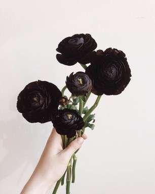 Flor Preta: Conheça os Tipos, Significado e +40 Ideias Lindas
