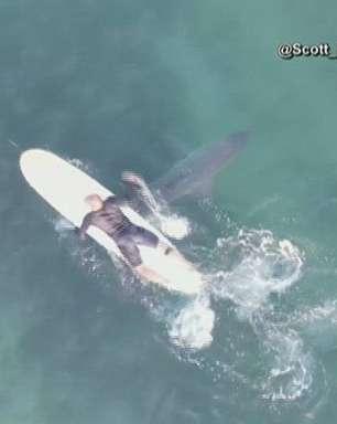EUA: drone filma tubarões nadando perto de surfistas; veja