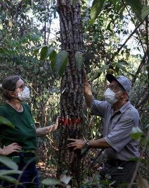 ESPECIAL-Amazônia está perto de seu ponto de inflexão? Três estudos do mundo real revelam ameaças
