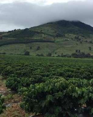 Experimento da illy planta café neutro em carbono em 2 países
