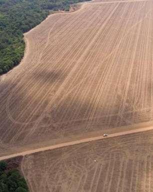 Desmatamento impulsiona emissões de CO2 no Brasil em 2020