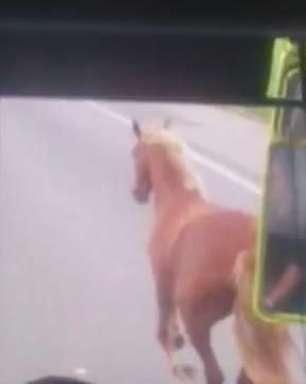 Cavalo invade estrada e escapa de ser atropelado por ônibus