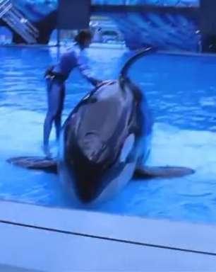 Espetáculo ou crueldade? SeaWorld enfrenta críticas