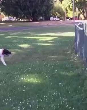 """Opa! Cachorrinho apressado dá """"mortal"""" sem querer"""