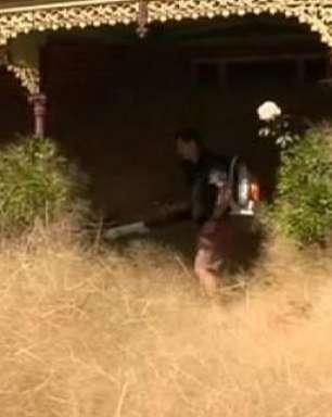 'Pânico cabeludo': palha gigante invade casas na Austrália