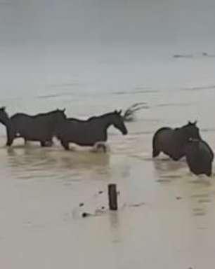Cavalos escapam de graves enchentes na Nova Zelândia