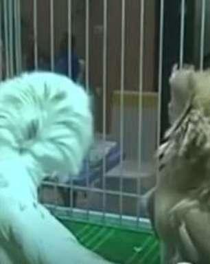 Criadores se reúnem para 1º concurso de beleza para pombos