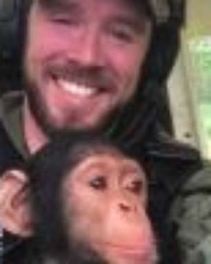 Bebê chimpanzé é resgatado de caçadores e fica 'amigo' de piloto de helicóptero