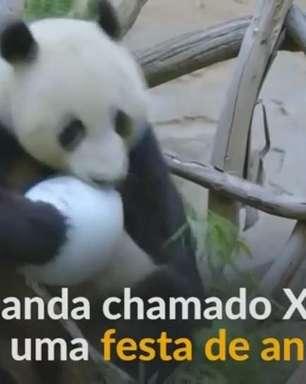 Panda-gigante celebra 6º aniversário em zoológico