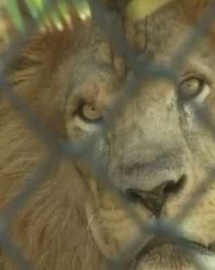 RJ: animais de zoo ganham picolés e ar-condicionado no verão