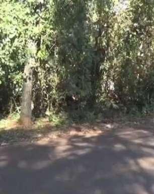 Macacos invadem casas no Bairro Jardim Ipê em Foz do Iguaçu
