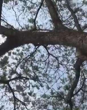 Dia da árvore: 10 ipês amarelos são plantados no Lago Municipal de Cascavel