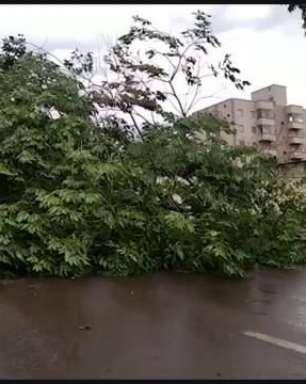 Temporal: Árvore é arrancada pela raiz e interdita a Rua Cuiabá