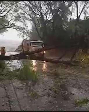 Árvore cai e interdita BR 497 em São Miguel do Iguaçu