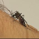 EUA encontram zika vírus em bebês mortos no Brasil