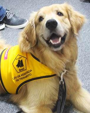 Cães treinados ajudam pessoas com necessidades especiais