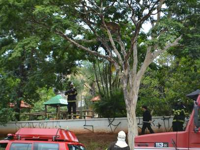Assim que chegaram ao local, os bombeiros e a PM isolaram a área e aguardaram a chegada da equipe do Zoológico de Bauru Fot Divulgação