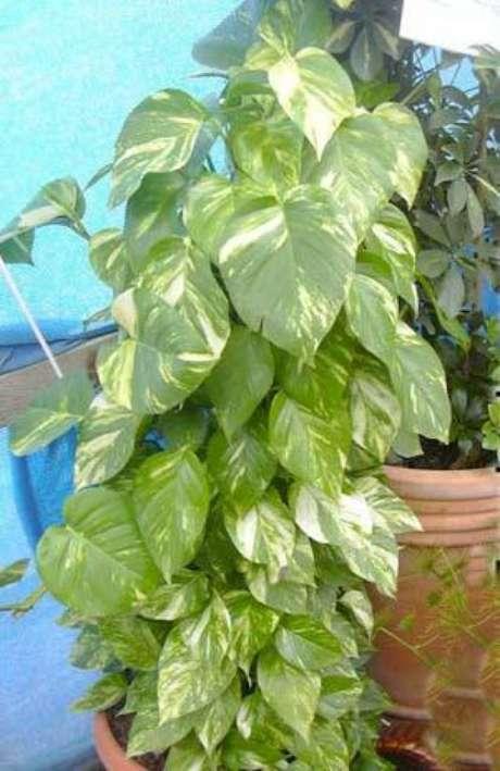 plantas que eliminan la contaminaci n de tu casa