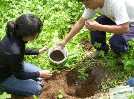 La Dirección Regional Agraria dotará plantones de tara, molle, frutales y plantas nativas para la reforestación de un área de 500 hectáreas.