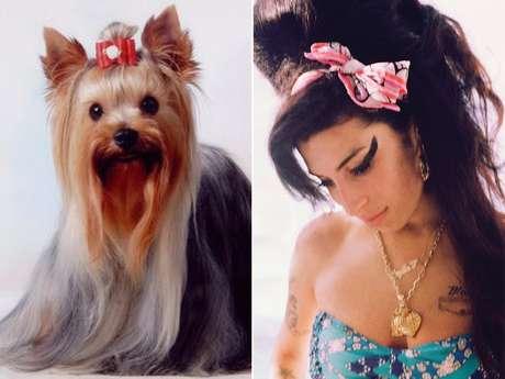 """Amy Winehouse siempre desató la polémica a su alrededor pero en materia de talento dejó un gran legado musical antes de su muerte el 23 de julio de 2011. El Yorkshire podría ser la réplica perruna de la creadora del disco """"Back To Black"""" por su picardía y facilidad de cambiar las imposiciones de su dueño."""
