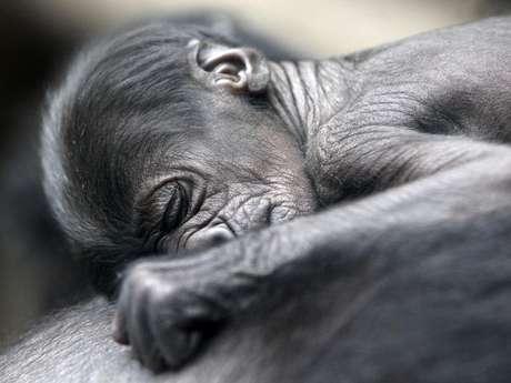 El bebé recién nacido descansa en el pecho de su madre.