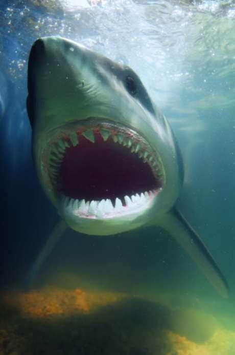 <p>Un surfista murió el 14 de julio de 2012tras ser atacado por un tiburón mientras practicaba surf en la Isla de Cuña, en el suroeste de Australia, según informaron las autoridades locales.</p>
