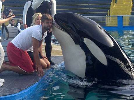 Gerard Pique gets a smooch from a killer whale at the zoo.