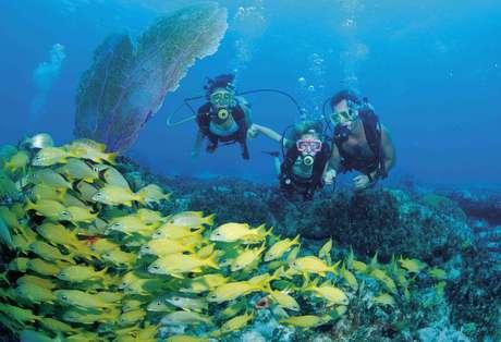 A menos de 300 km de Miami, Nassau, capital das Bahamas, é uma cidade vibrante, com atividades para todas as idades
