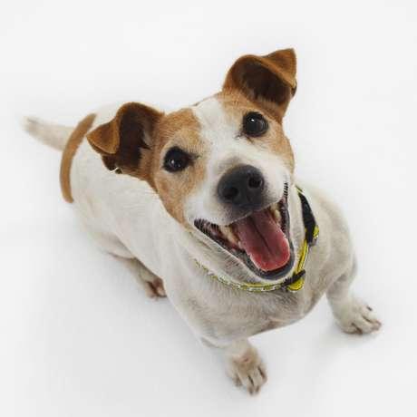 Especialistas alertam que a alimentação do cachorro pode afetar sua saúde física e mental; é preciso investir em ração de qualidade