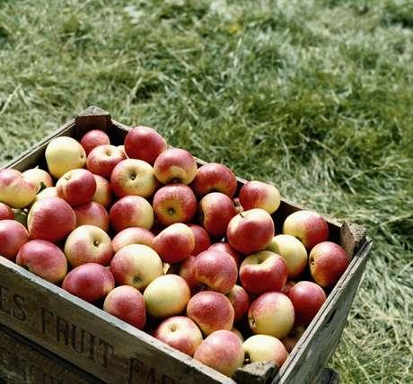 Além de saborosa, a maça ajuda a previnir e combater doenças