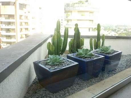 Grande símbolo da vegetação do deserto, os cactos são as mais famosas entre as plantas que sobrevivem em ambientes áridos e podem ser cultivados em casa
